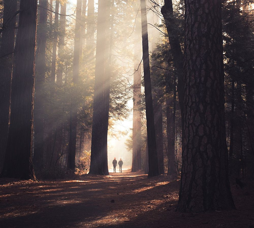 How-can-my-thoughts-affect-people-reality-physical-matter?-trees