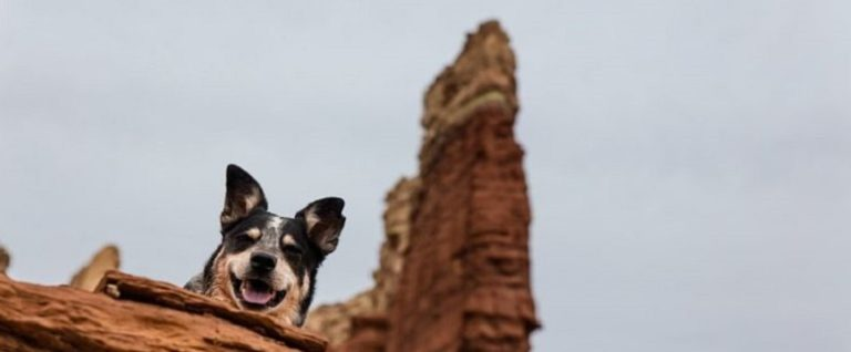 Happy Dog reflects the nature of Consciousness and general